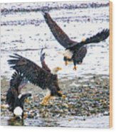 Group Of Eagles Wood Print