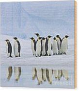 Group Of Emperor Penguins Wood Print