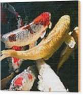 Group Of Koi Fish Wood Print