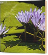 Group Of Lavender Lillies Wood Print
