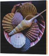 Group Of Shells #1 Wood Print