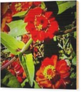 Group Of Small Red Zinnia's Wood Print