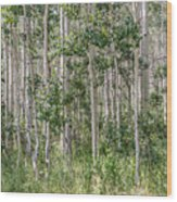 Grove Of Quaking Aspen Aka Quakies Wood Print
