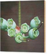 Growing Blueberries Wood Print