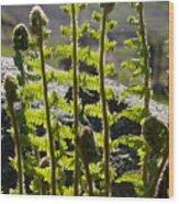 Growing Ferns Wood Print