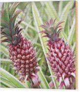 Growing Red Pineapples Wood Print