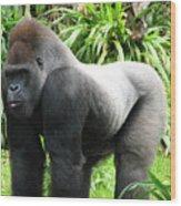 Grumpy Gorilla II Wood Print