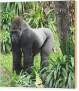 Grumpy Gorilla IIi Wood Print