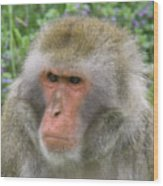 Grumpy Monkey Wood Print