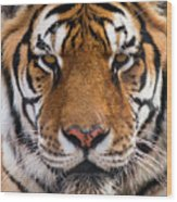 Hunter's Displeasure Wood Print