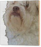 Grumpy Terrier Dog Face Wood Print