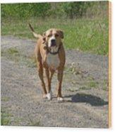 Guarding Pit Bull Dog Wood Print