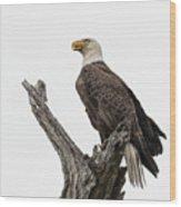 Guarding The Nest Wood Print