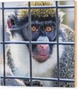 Guenon Monkey Wood Print