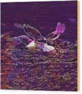 Guillemot Sea Bird Nature Coast  Wood Print