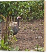 Guinea Fowl 1 Wood Print