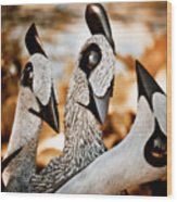 Guineafowl Family Wood Print