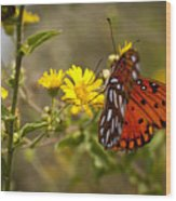 Gulf Fritillary Agraulis Vanillae Red Butterfly Wood Print