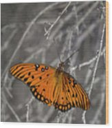 Gulf Fritillary Butterfly In The Brambles Wood Print