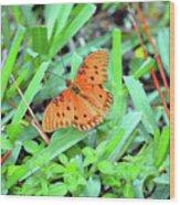 Gulf Fritillary Butterfly  Wood Print