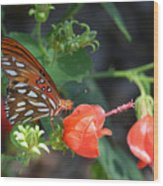 Gulf Fritillary Butterfly On Beautiful Flowers  Wood Print