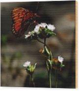 Gulf Fritillary Butterfly Too Wood Print