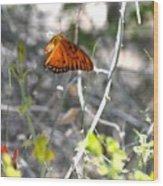 Gulf Fritillary Flying Wood Print