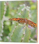 Gulf Fritillary On Cactus  Wood Print