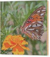Gulf Fritillary On Marigold Wood Print