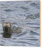 Gulf Islands Otter Wood Print