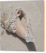 Gulf Of Mexico Shell Wood Print