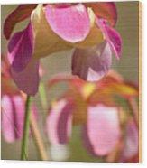 Gulf Purple Pitcher Plant Wood Print