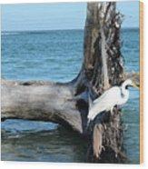 Gulf Shallows Wood Print
