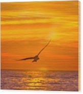 Gull At Sunrise Wood Print