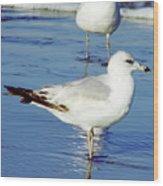 Gull - Beach -reflection Wood Print