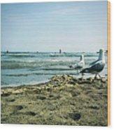 Gull Beach Wood Print