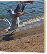 Gull Fight Wood Print