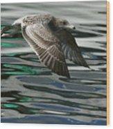 Gull Flight Wood Print
