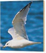 Gull Flying Wood Print