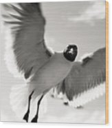 Gull In Flight 2 Wood Print