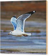 Gull Inflight Wood Print