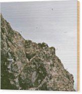 Gull Island Wood Print