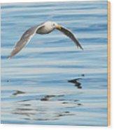 Gull Mirrored Wood Print
