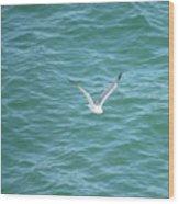 Gull Over The Gulf Wood Print