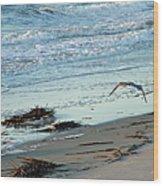 Gull Over Tybee Island Beach Wood Print