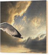 Gull With Approaching Storm Wood Print by Meirion Matthias