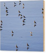 Gulls And Reflections Dot The Water Wood Print