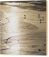 Gulls At Gloucester Wood Print