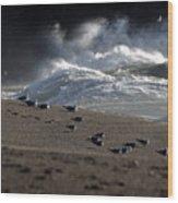 Gulls At Goat Rock Sundown Wood Print