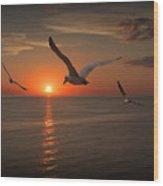 Gulls Flying Towards The Sun Wood Print